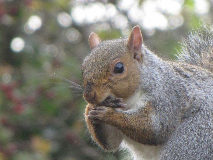 Животные, которые держат лапу во рту (25 фото)