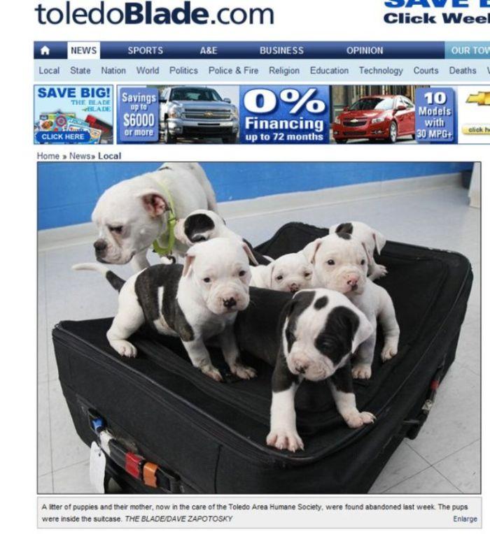Бедные щенки (4 фото)