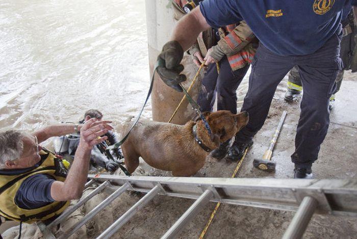 Спасение собаки в Канзасе (20 фото)
