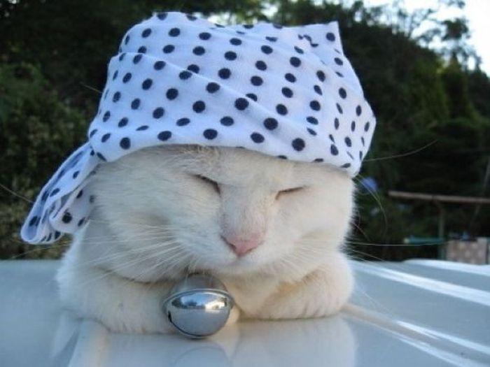 Модный кот (26 фото)