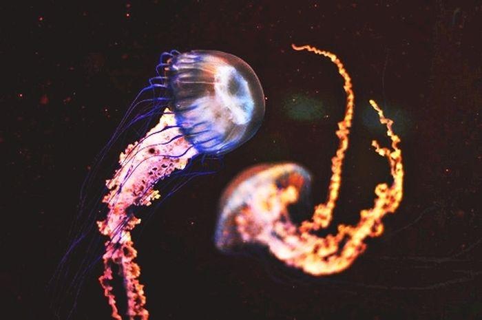 Удивительные медузы (52 фото)