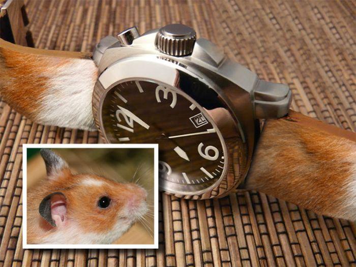 В память о животном (6 фото)