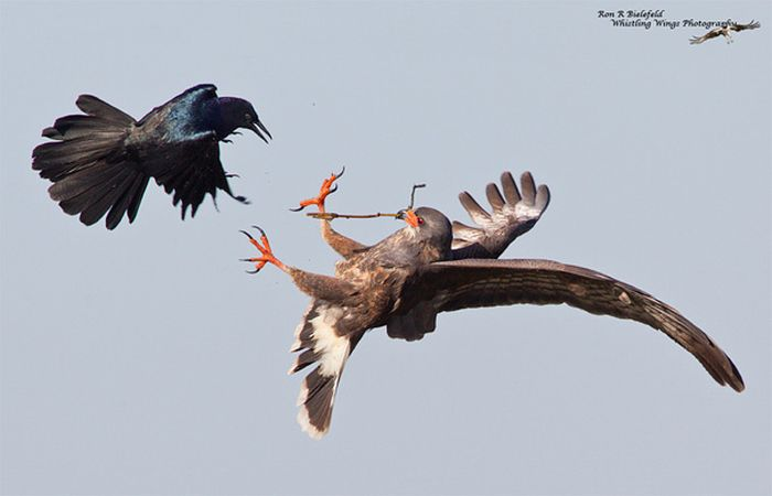 Avcı ve Avı 20(Fotograf)