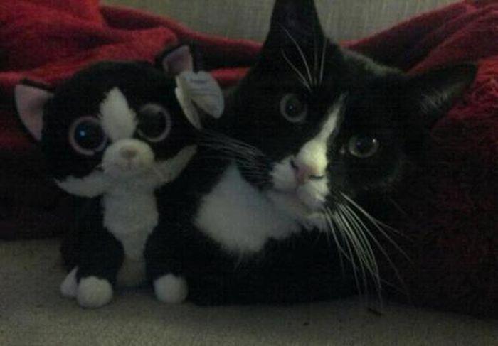 Животные с плюшевыми игрушками (33 фото)
