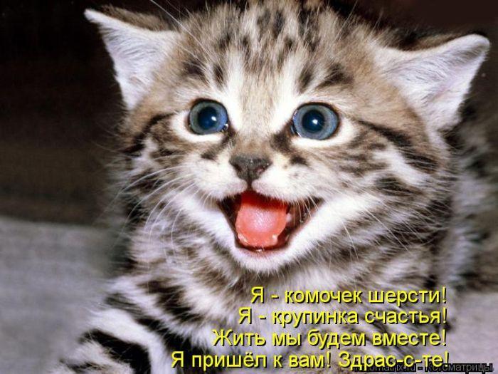 Самые интересные факты о котах (11 фото + текст)