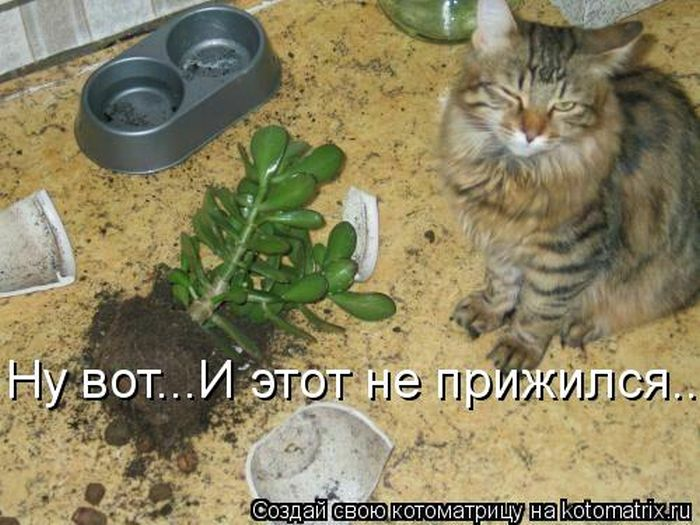 http://de.trinixy.ru/pics5/20120420/kotomatrix_18.jpg