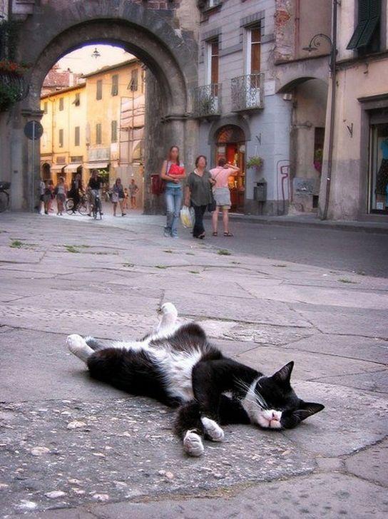 Спящие коты (35 фото)