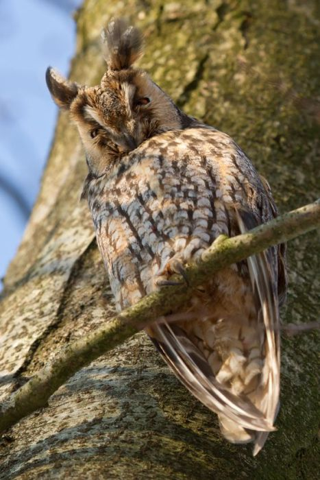 Сонные совы (106 фото)