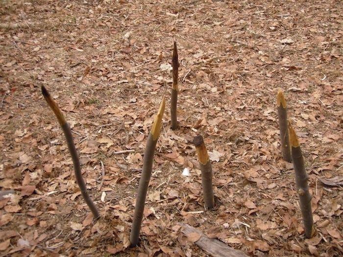 Ловушки в парке (14 фото)