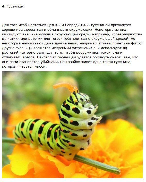Хитрецы из мира животных (10 фото + текст)