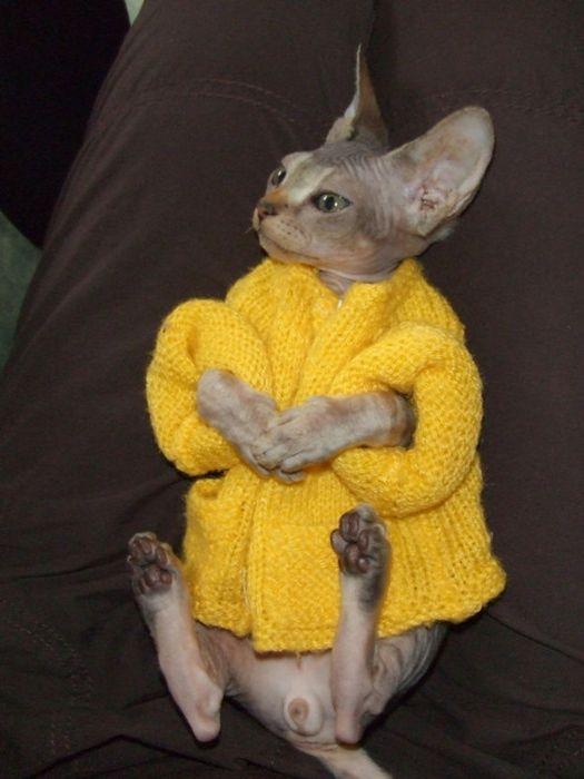 Животные в одежде (88 фото)