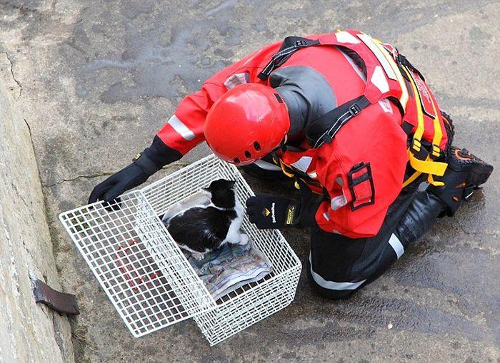 Спасение бродячей кошки (7 фото)