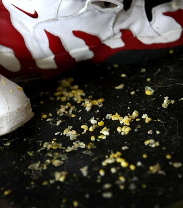 Поедание кукурузы в Южной Каролине (25 фото)