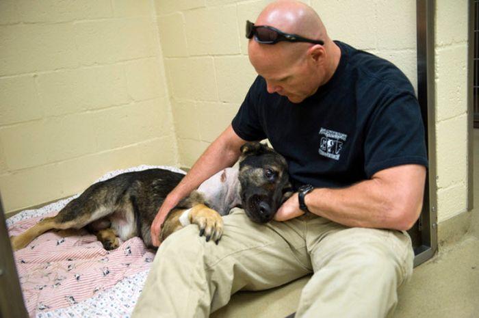 Отважная полицейская собака (22 фото)