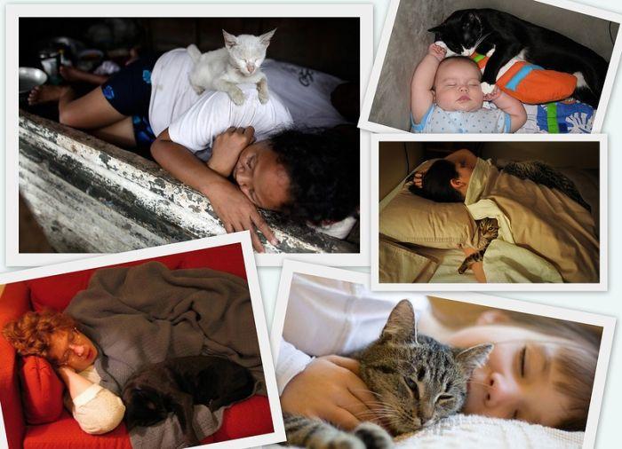 Коты и люди (6 фото)