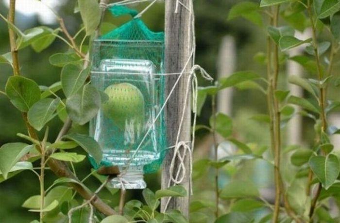 Как фрукты проникают в бутылку (8 фото)