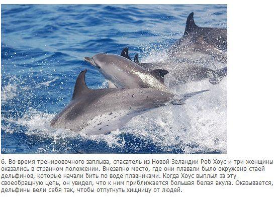 Выжившие при встрече с акулой (10 фото)