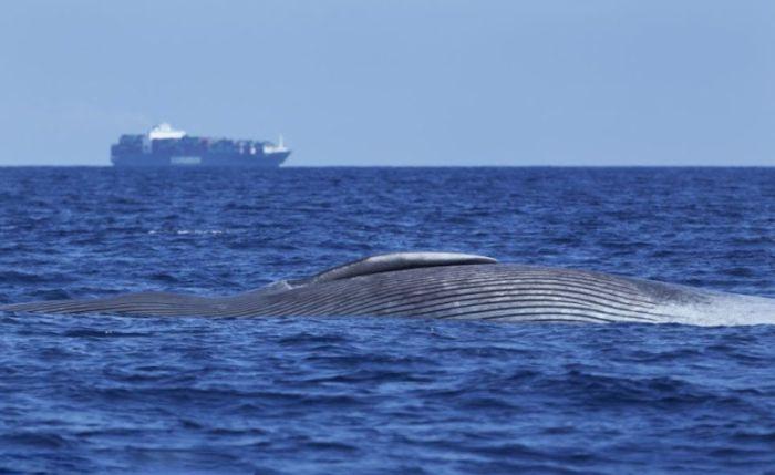 Раненый кит (4 фото)