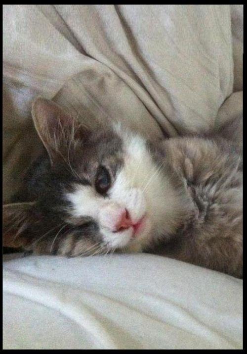Счастливый котенок (5 фото)