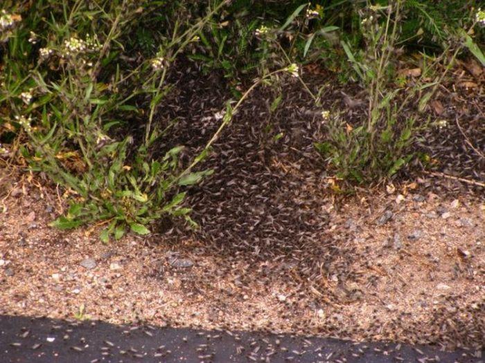 Минскую область атаковали комары (18 фото)
