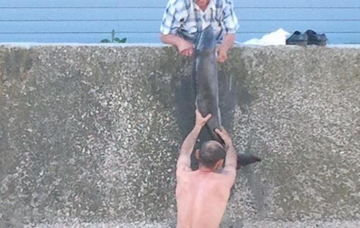 Спасение дельфина в Керчи (7 фото)