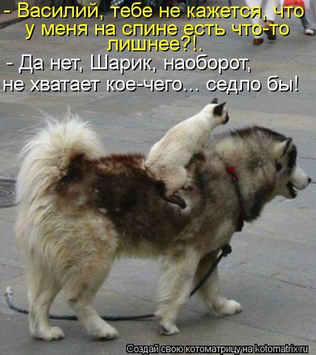 http://cdn.trinixy.ru/pics5/20120518/kotomatrix_14.jpg