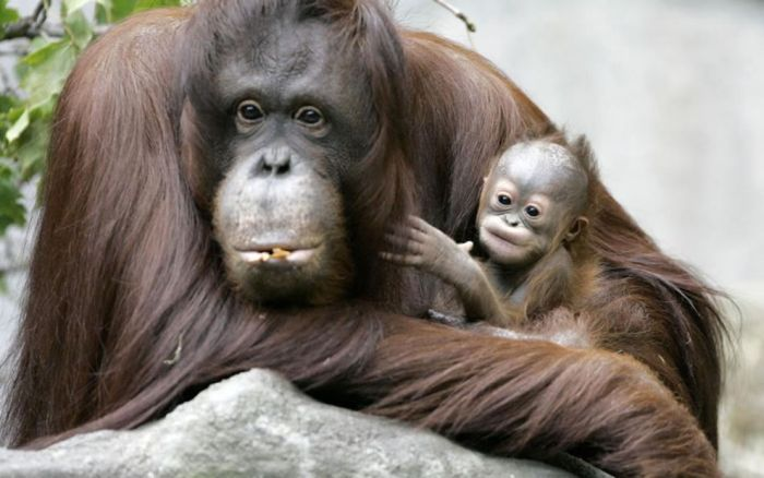 Детеныши животных и их мамы (40 фото)