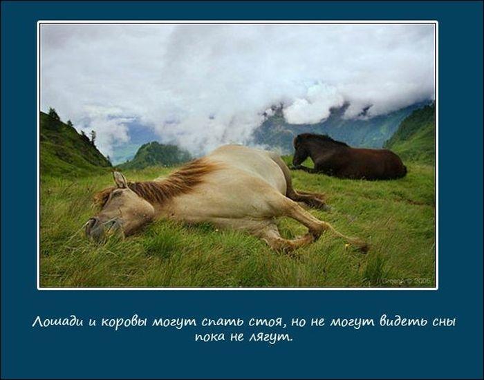Про сон животных (10 фото)