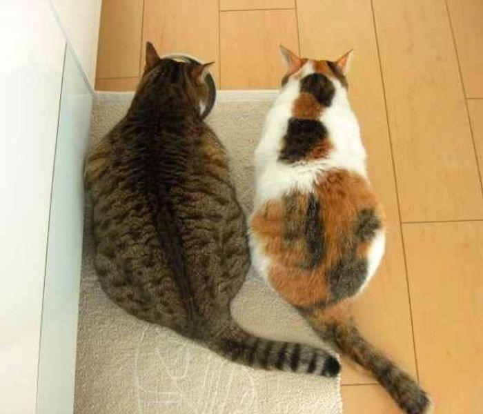 Толстый кот (4 фото)