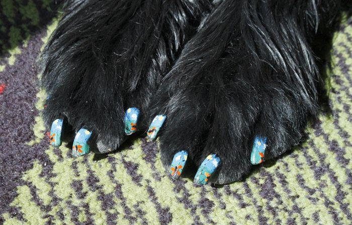 Собачий маникюр (27 фото)
