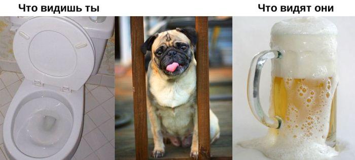 Что видят животные (11 фото)