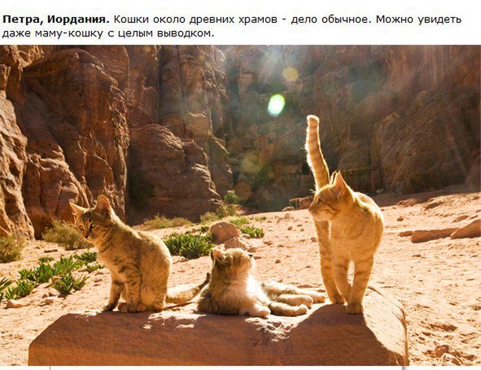 О кошках в разных городах (28 фото)