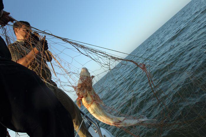 рыбалка браконьеров на каспии