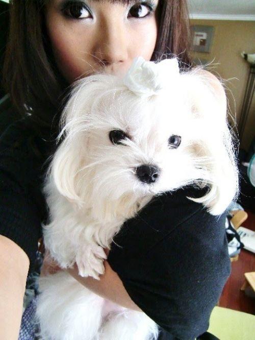 Милый пес (8 фото)