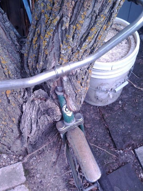Дерево и велосипед (7 фото)
