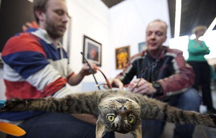 Голландский летающий котэ (5 фото + 2 видео)