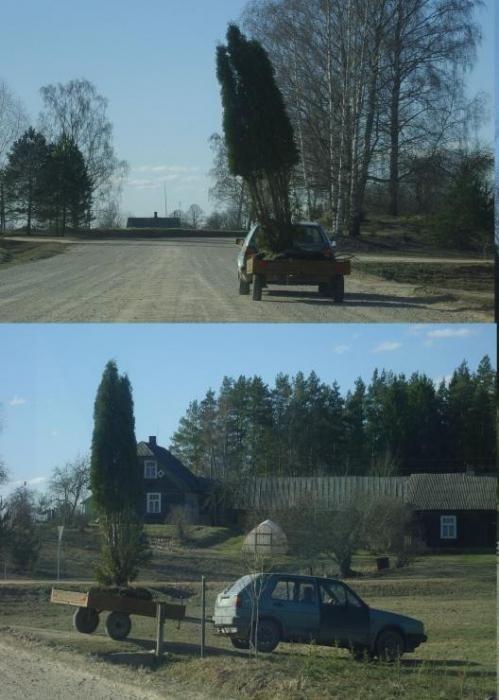 Дураки и дороги (52 фото)