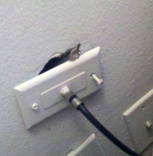 Неожиданный гость проник в квартиру через розетку (4 фото)