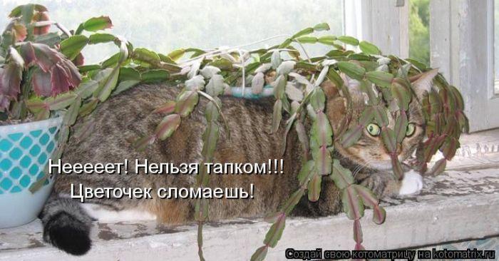 http://de.trinixy.ru/pics5/20120621/kotomatrix_06.jpg