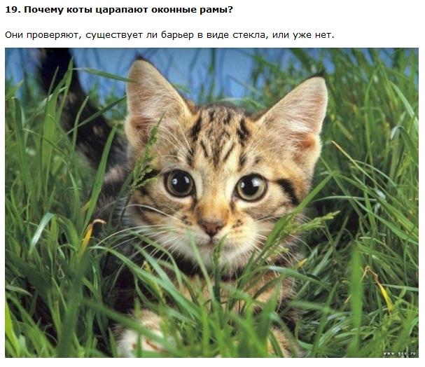Интересные и правдивые факты о котах (11 фото + текст)