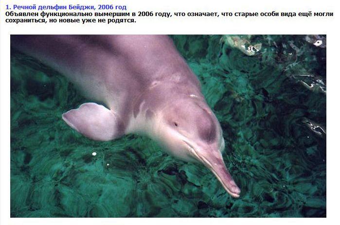 ТОП-8 видов животных, которых мы больше не увидим (9 фото + текст)
