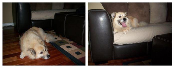 Когда жена дома, и когда она в командировке (7 фото)