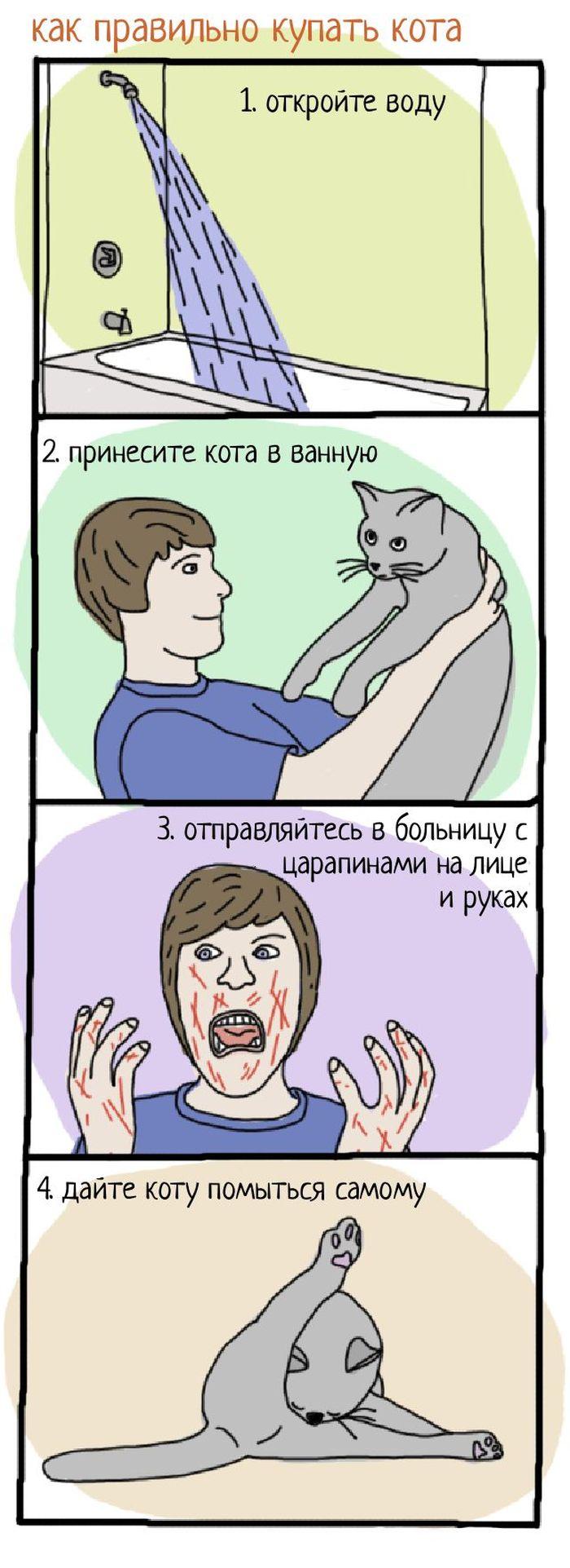 Как правильно купать кота в ванной (1 картинка)