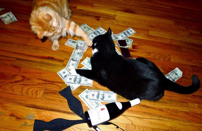 Коты и наличность (64 фото)