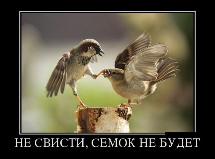 Свободное общение