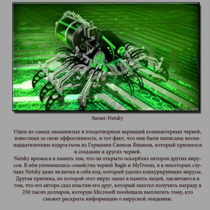 ТОП-5 компьютерных вирусов (5 фото)
