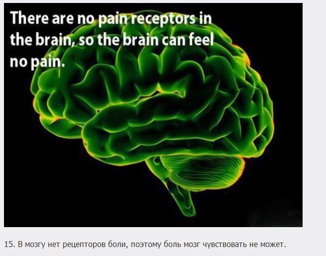 18 познавательных фактов о мозге (18 фото)