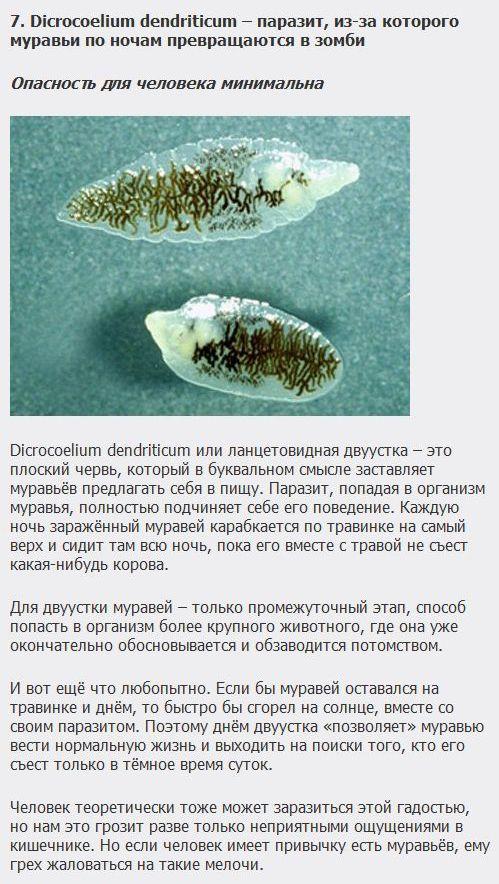самый опасный паразит в теле человека фото
