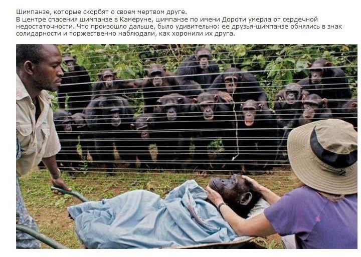 У животных есть душа (14 фото)