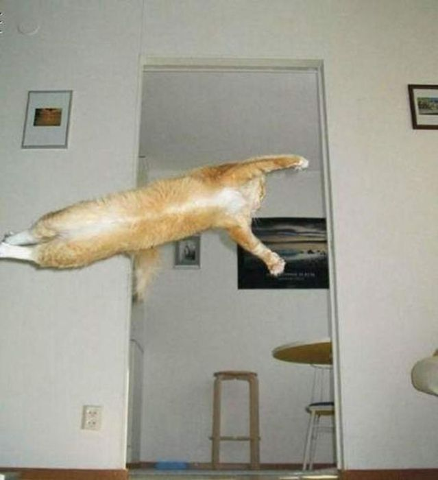 Снимки котов, сделанные в нужный момент (32 фото)